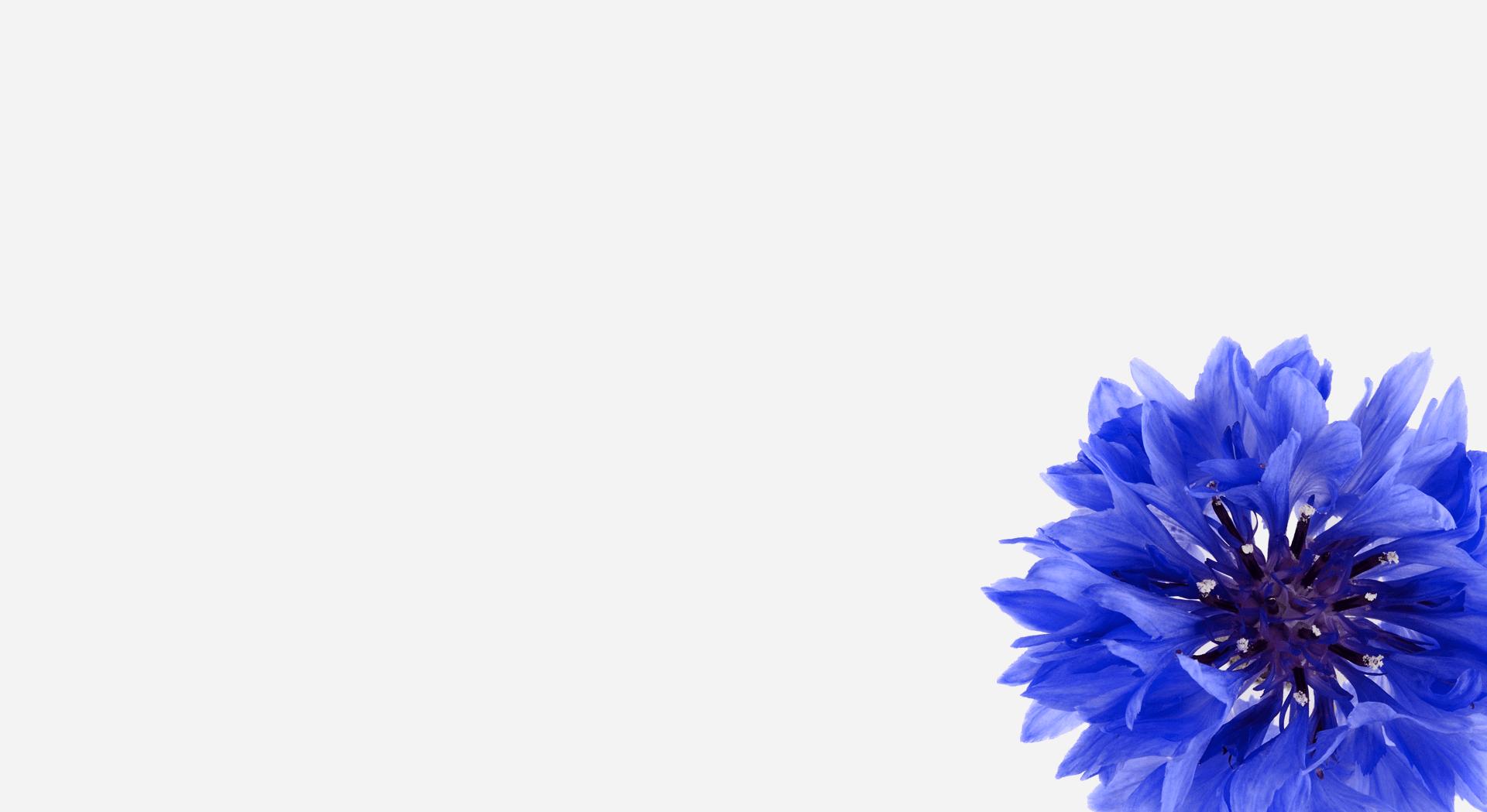 blaue-blume-gross